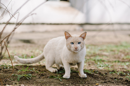roofless: Stray squint cat standing on grass and looking at camera, copy space