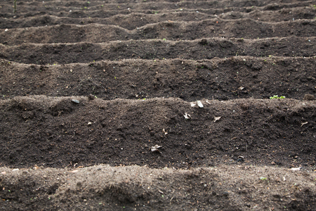 furrows: Cultivated field with empty furrows of peat ready for seasonal spring planting