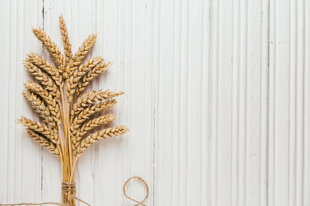 cope: Golden ripe wheat on rustic white wooden background with cope space, top view Stock Photo