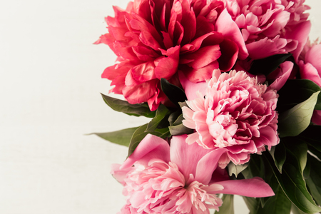 Pink and red peonies flowers with leaves on white isolated background, copy space, flat lay, top view Stock Photo