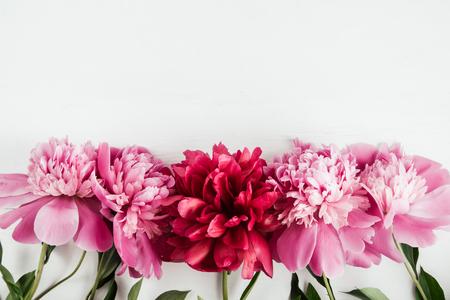 De roze en rode pioenenbloemen met bladeren op wit geïsoleerde achtergrond, vlakke exemplaarruimte, legt, hoogste mening Stockfoto