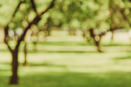 abstracta fondo borroso verde del parque callejón, espacio de la copia, el desenfoque de la lente Foto de archivo