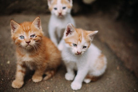 pity: Group of cute homeless kittens looking at camera