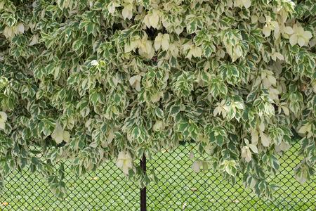bush on the wall.