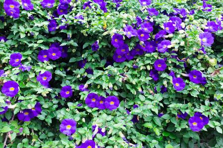 dwell house: blue flowers Stock Photo
