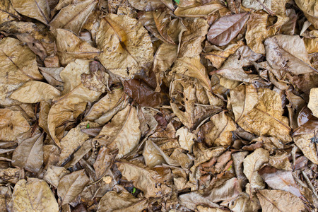 dead leaves: Dead leaves shot ideal for backgrounds