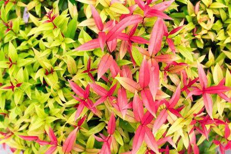 hojas de colores: hojas de colores