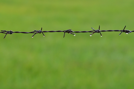 Barb wire with water drops and rice field background photo