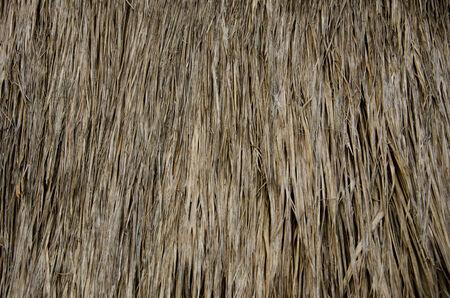 thatch: Thatch texture