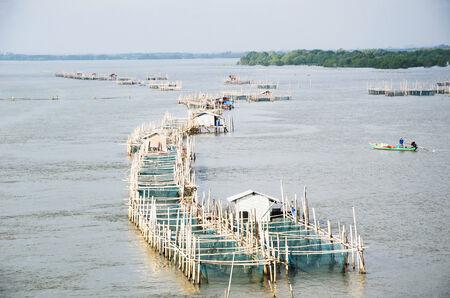 fishery: Fishery farm