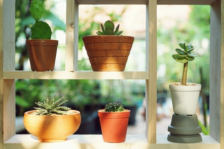 Small succulent pot plants decorative on wood window frame with morning warm light