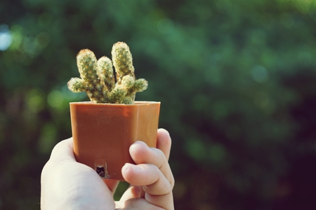 Little cute succulent pot plant giving with hand and blur garden background under morning warm light Stock Photo