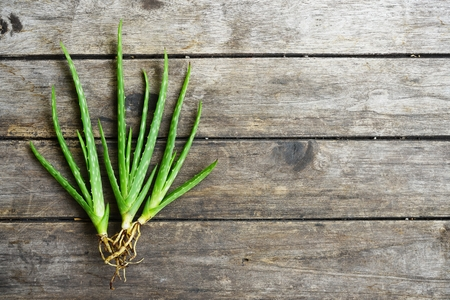 Aloe vera on wooden table background, skin care concept, copy space Stock Photo