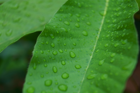 Closeup of water drops texture pattern on green leaf in garden after raining, freshness