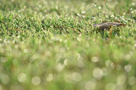 Dew droplet on top of green grass in warm morning light, with smooth nice bokeh