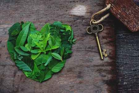Creative artwork layout of assorted green leafs arranged into heart shape, eco friendly romantic love concept, copy space