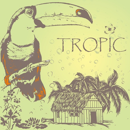 birds of paradise: grunge toukan on the tropic palm beach in rain