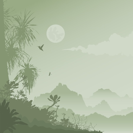 jungle at night Vector