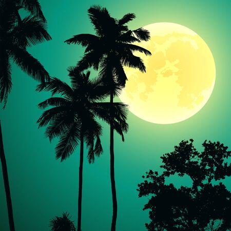 rainforest: jungle at night