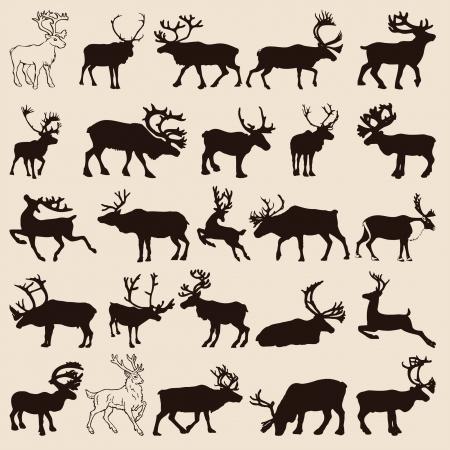 25 different reindeer