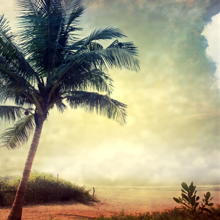 grunge palm background photo