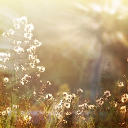 sunshine insect: vintage flower background