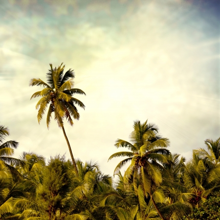 palm: beach background Stock Photo