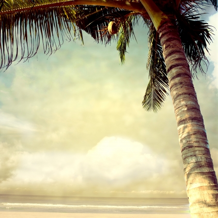 noix de coco: vintage background palme Banque d'images