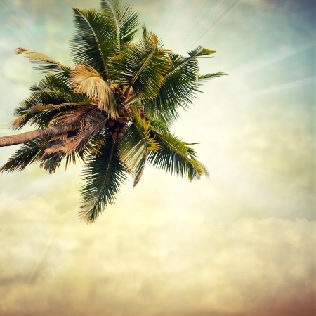 grunge palm background Stock Photo - 15133162