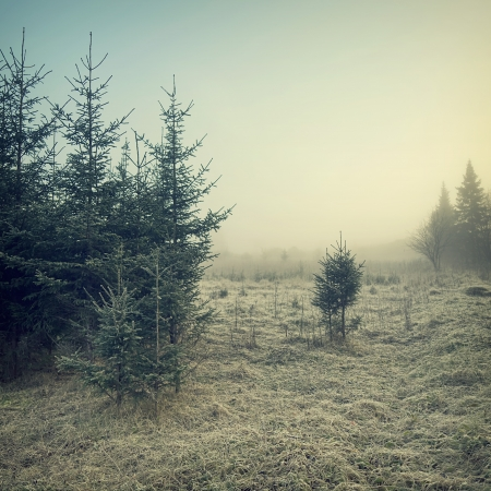 nature background: vintage nature background