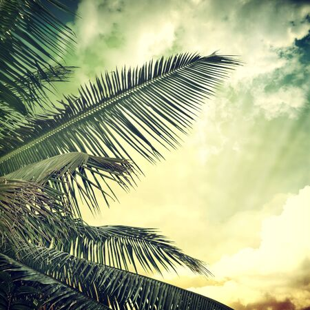 palm: grunge palm background