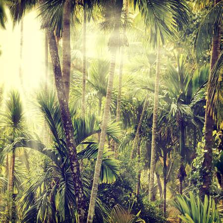 africa jungle: Vintage nature background
