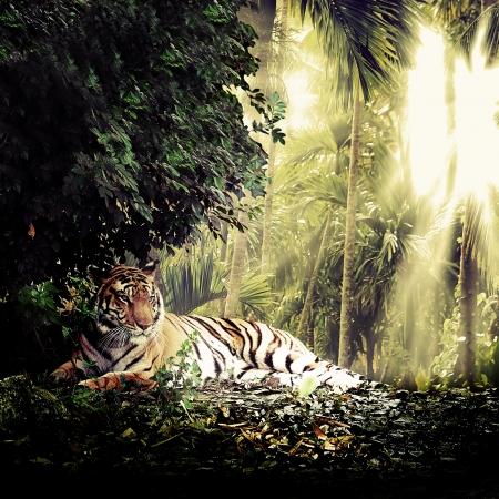 animales de la selva: La naturaleza de fondo Foto de archivo