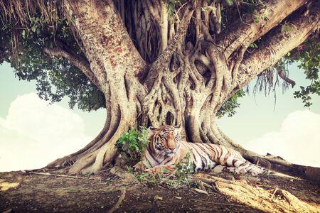 banyan tree: wild forest background