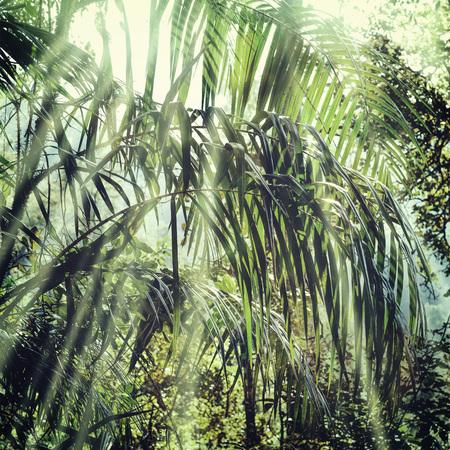 fog forest: Jungle tropical background