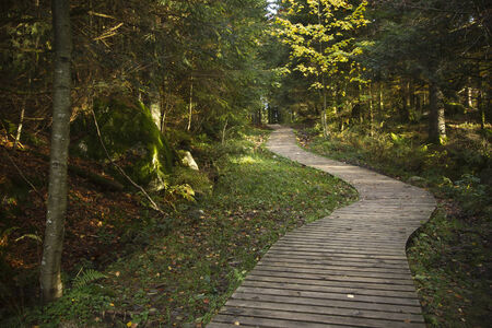 turba: trail running de madera, forst, Lispach, turbera, Vosges, Francia