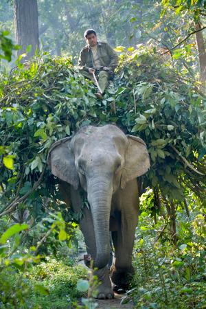 elephant and mahout ict, Bardia, Nepal