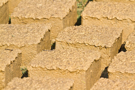 brig: mud bricks drying under the sun, to build houses typical Tharu