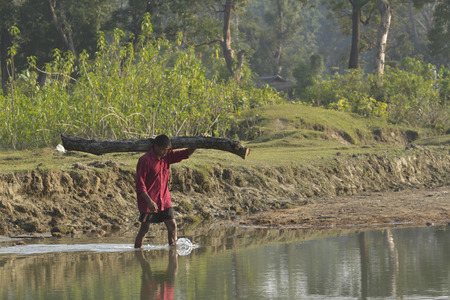villager: a villager carries wood on his shoulder, Bardia, Nepal