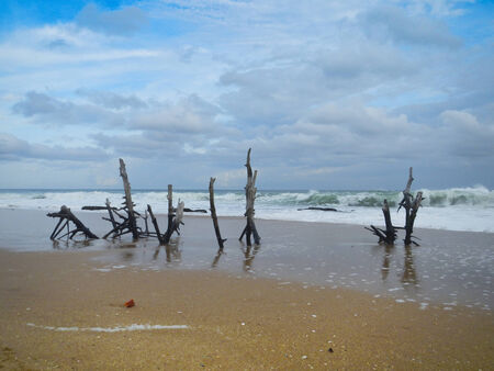 tangalle: Sri Lanka, Tangalle beach, dead branches stuck in the sand
