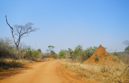 kruger national park: dusty trail and termite mound at Kruger National Park Stock Photo