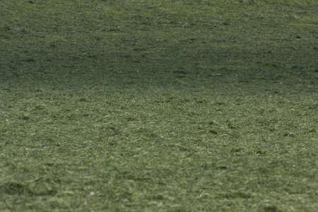 jura: grass in a field, Jura, France Stock Photo
