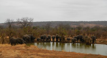 kruger: herd of african elephants at Kruger national parl South Africa Stock Photo
