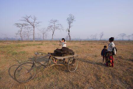carcass: mensen die door driewieler koe karkas voor de gieren, Lumbini, Nepal