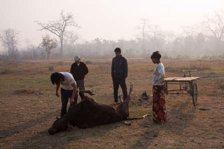 carcass: mensen te brengen door driewieler koe karkas voor de gieren, Lumbini, Nepal