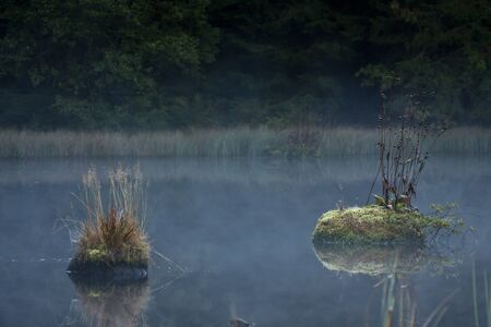 contryside: cold morning on a bog on fall season, Vosges, France