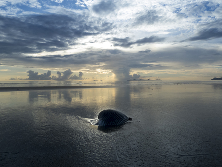 riff: shell on foreground and backlight, Haad Yao Beach, Thailand Stock Photo