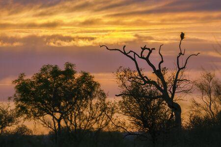 kruger national park: sunset on savannah, Kruger national park