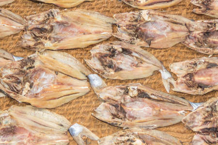 third world: dead fishes drying under the sun in Sri Lanka Stock Photo