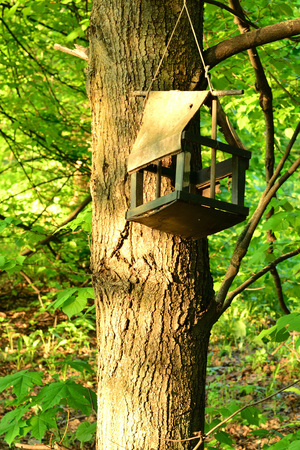 Abstract composition for designers with nesting box between tree branches Reklamní fotografie